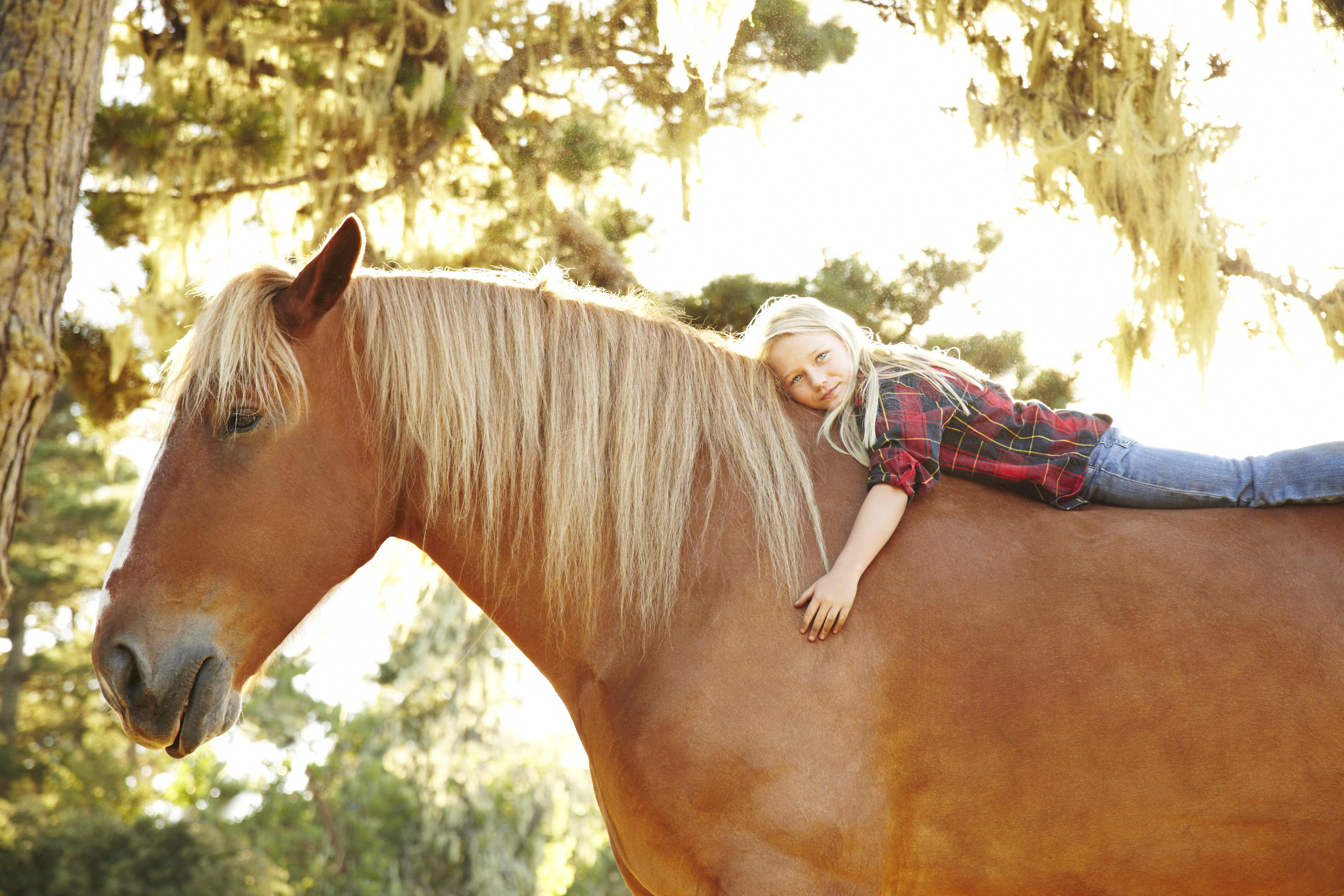 Draft Horse & Girl Photo - Small